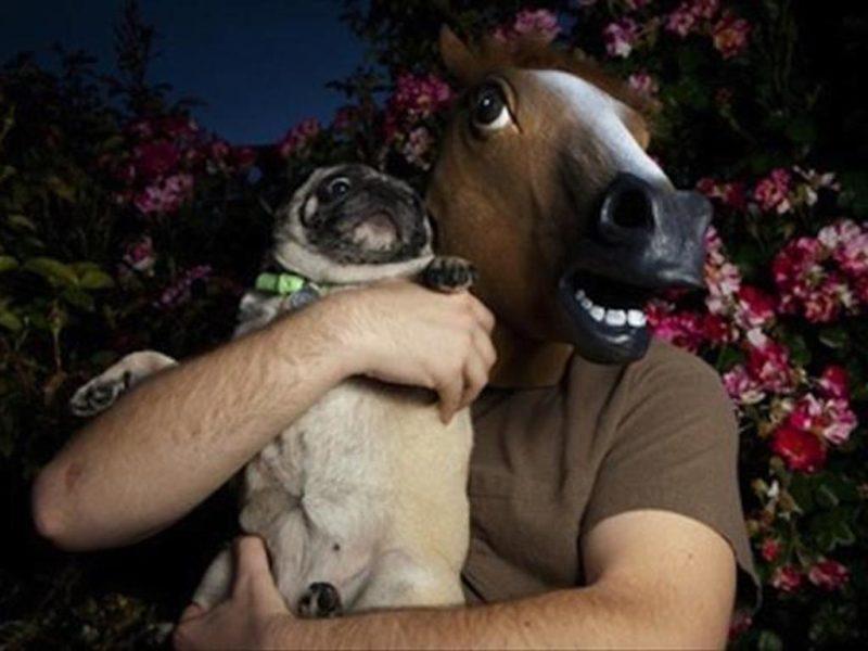 weird dog horse
