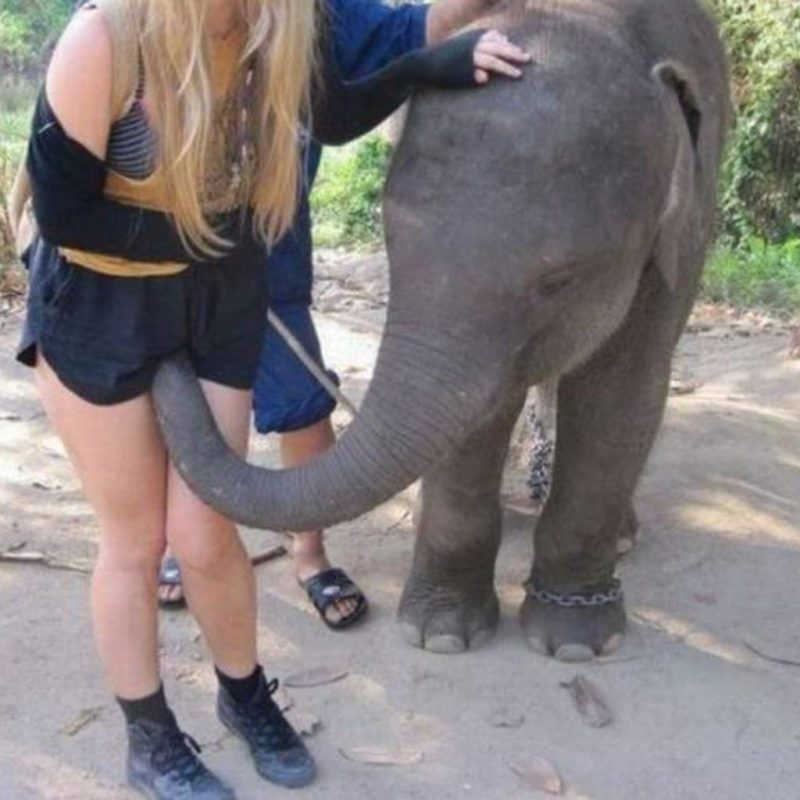 black woman fucks an elephant